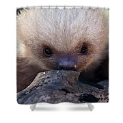 Baby Sloth 2 Shower Curtain by Heiko Koehrer-Wagner