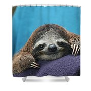 Baby Sloth Shower Curtain
