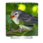 Baby Sparrow In The Maple Tree Shower Curtain by Karon Melillo DeVega