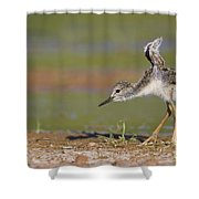 Baby Stilt Stretching Its Wings Shower Curtain