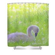 Baby Swans Enjoy A Summer Day Shower Curtain