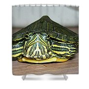 Baby Turtle Straight On Shower Curtain