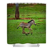 Baby Zebra Running Shower Curtain