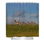 Babysitting - Antelope - Johnson County - Wyoming Shower Curtain
