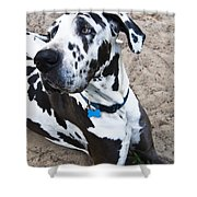 Bacchus The Great Dane Shower Curtain
