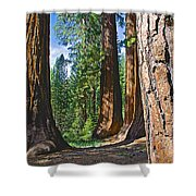 Bachelor And Three Graces In Mariposa Grove In Yosemite National Park-california Shower Curtain
