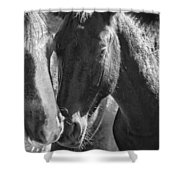 Bachelor Stallions - Pryor Mustangs - Bw Shower Curtain