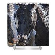 Bachelor Stallions - Pryor Mustangs Shower Curtain
