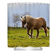 Back Light Horse Shower Curtain