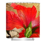 Back Of A Red Hibiscus Flower Against Stone Shower Curtain