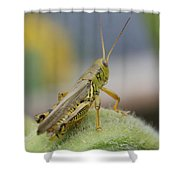 Back Side View Of Green Grasshopper....   # Shower Curtain