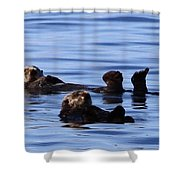 Back Stroke Shower Curtain