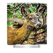 Back-tail Doe Shower Curtain