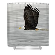 Back To The Nest Shower Curtain