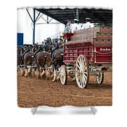 Back View Anheuser Busch Clydesdales Pulling A Beer Wagon Usa Shower Curtain