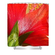 Back View Of A Beautiful Bright Red Hibiscus Flower Shower Curtain