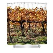 Backlit Autumn Vineyard Shower Curtain