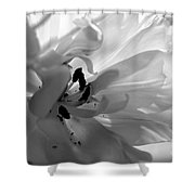 Backlit Black And White Tulip Shower Curtain