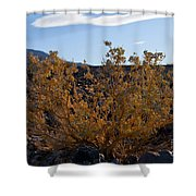 Backlit Desert Foliage Shower Curtain