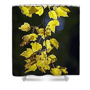 Backlit Leaves Of Autumn Shower Curtain