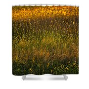 Backlit Meadow Grasses Shower Curtain