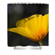Backlit Poppy Shower Curtain