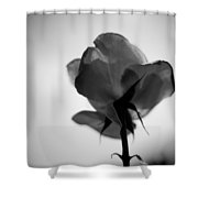 Backlit Rose Black And White Shower Curtain