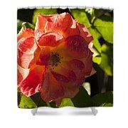 Backlit  Rose Shower Curtain