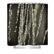 Backlit Sepia Toned Wild Grasses In Black And White Shower Curtain