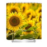 Backlit Sunflower Shower Curtain