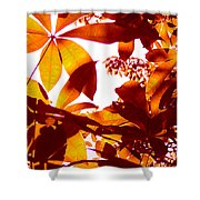 Backlit Tree Leaves 2 Shower Curtain