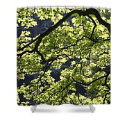 Backlit Tree Shower Curtain