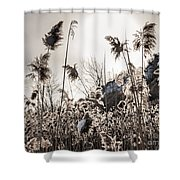 Backlit Winter Reeds Shower Curtain