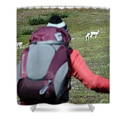 Backpacker Watches Dall Sheep Shower Curtain