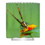 Backside Of Beauty Shower Curtain