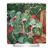 Backyard Begonia Shower Curtain