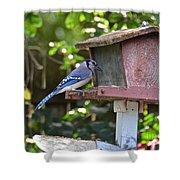 Backyard Bird Feeder Shower Curtain