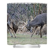 Backyard Brawl Shower Curtain