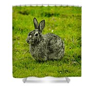 Backyard Bunny In Black White And Green Shower Curtain