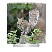 Backyard Burglar Shower Curtain