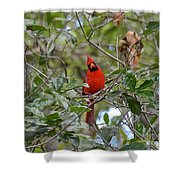 Backyard Cardinal In Tree Shower Curtain