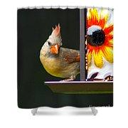 Backyard Female Cardinal Shower Curtain