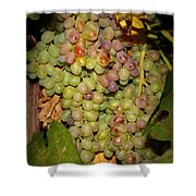 Backyard Garden Series -hidden Grape Cluster Shower Curtain