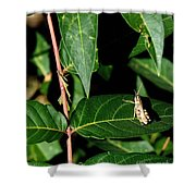 Backyard Hopper Shower Curtain