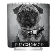 Bad Dog Shower Curtain by Edward Fielding