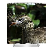 Bad Feather Day Shower Curtain