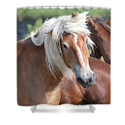 Bad Hair Day 8024 Shower Curtain