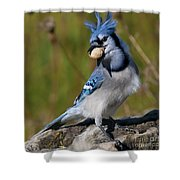 Bad Hair Day.. Shower Curtain