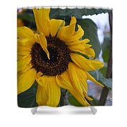 Bad Petal Day  Shower Curtain