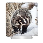 Badger In The Snow Shower Curtain